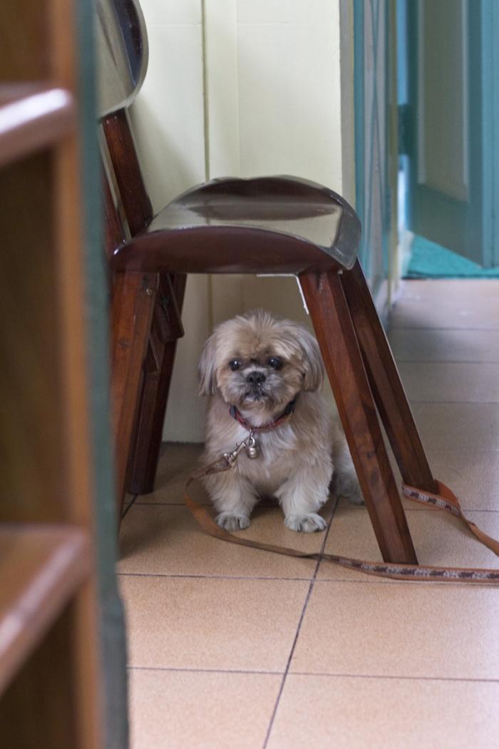 Hostel Guard Dog