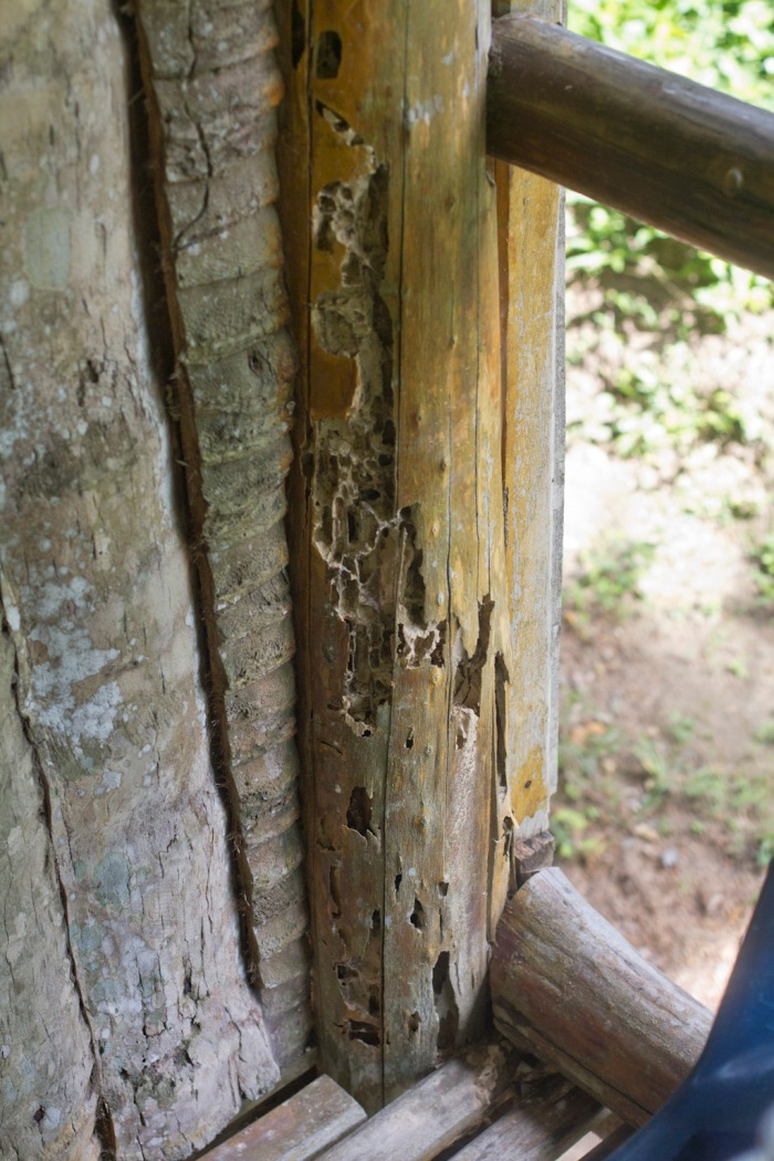 Rotten wood, you could hear the termites chomping