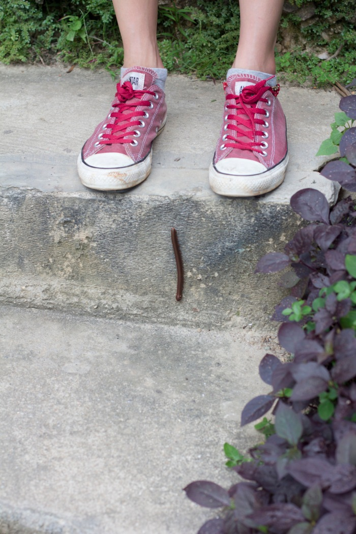 A nice sized centipede