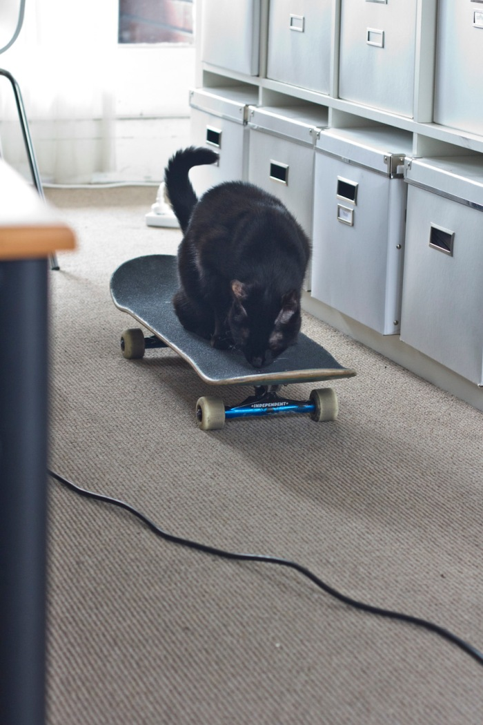 The cat tested out my board. Once I got her approval I was good to go
