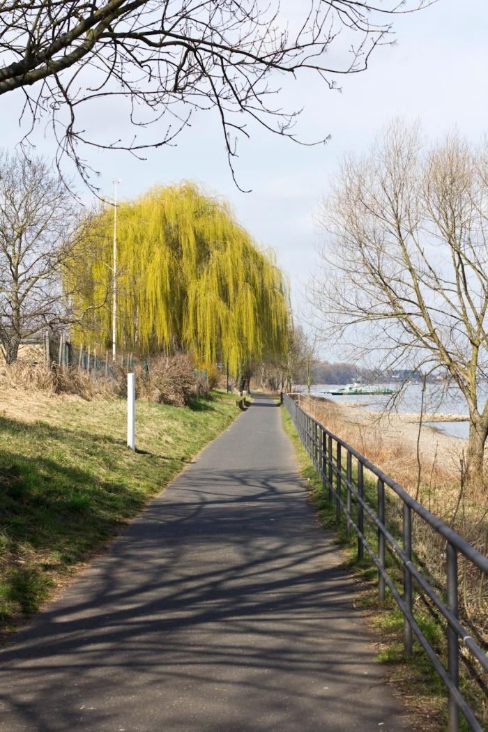 The bike path a few kilometers outside Bonn. Followoing the Rhein
